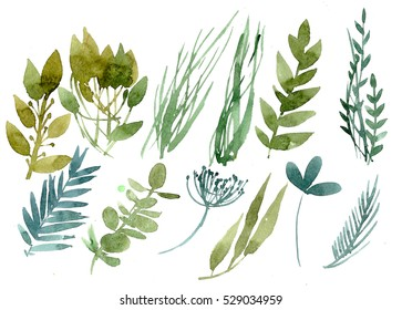 Set of herbs and leaves painted in watercolor on white paper. Sketch of flowers and herbs. Wreath, garland of flowers.