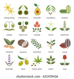 Set of herbs and plants hand drawn icons that are used in cosmetics and natural medicine. Raster version
