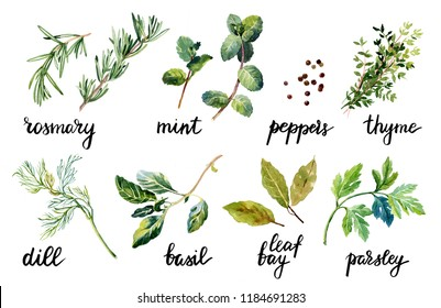Set of herbs and spice with lettering. Watercolor hand draw illustration. Isolated on white background