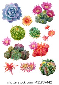 Set of high quality hand painted watercolor elements for your design with succulent plants,cactus and more. Realistic illustration of Cactus set. Exotic floral plant flower.