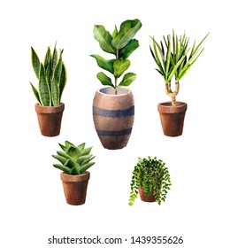 Set of home plants in pots. illustration for print, home or garden decoration. Indoor plants in a pot