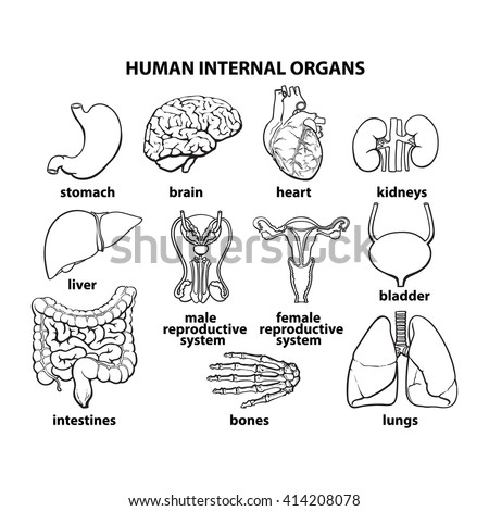 Human Organ Diagram Black And White Car Wiring Diagrams Explained