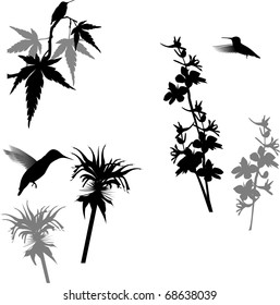 Set of Hummingbirds and Flowers - isolated