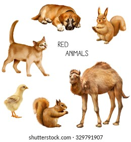 Set of Illustration of red animals: red puppy, red kitten, eating squirrel, a camel and a baby chick isolated on white background