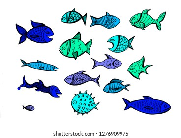 A set of illustrations of different fishes.