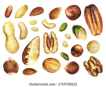 Set of illustrations of different sorts of nuts watercolor drawn. Pine nuts, pistachio, peanut, hazelnut, macadamia, pecan, cashew, Brazil nut, walnut