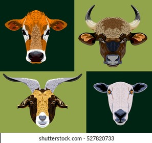 Set of images of domestic grazing animals - a bull, a cow, sheep, goat