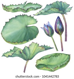 Set with Indian lotus leaves. Watercolor hand drawn painting illustration isolated on white background.