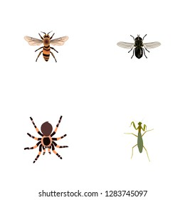 Set of insect realistic symbols with mantis, fly, housefly and other icons for your web mobile app logo design.