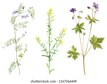 Set of isolated watercolor drawing palnts and flowers, hand drawn illustration