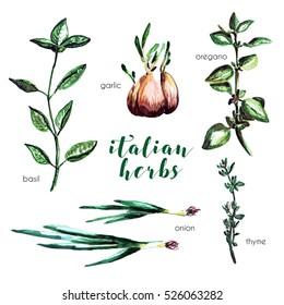 Set of Italian herbs. Basil, garlic, oregano, onion, thyme elements