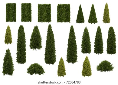 Set of juniper and thuja trees isolated on white background