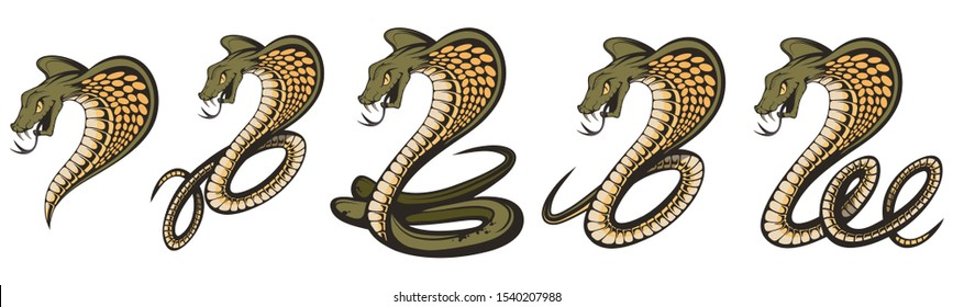 Set of a king cobra with hood. Snake Cobra is ready to hit with fangs and tongue. Viper snake. Mascot realistic King cobra illustration for a sport team.