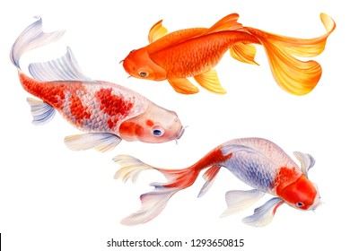 set of koi fish  on white background, watercolor carp, hand drawn, illustration for greeting cards, invitations. Watercolor painting