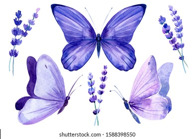 set of lavender flowers and butterflies on an isolated white background, watercolor botanical painting