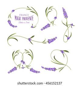 Set of lavender flowers elements. Botanical illustration. Collection of lavender flowers on a white background. Watercolor lavender set. Lavender flowers isolated on white background.