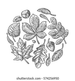 Set leaf. vintage engraved illustration. Isolated on white background