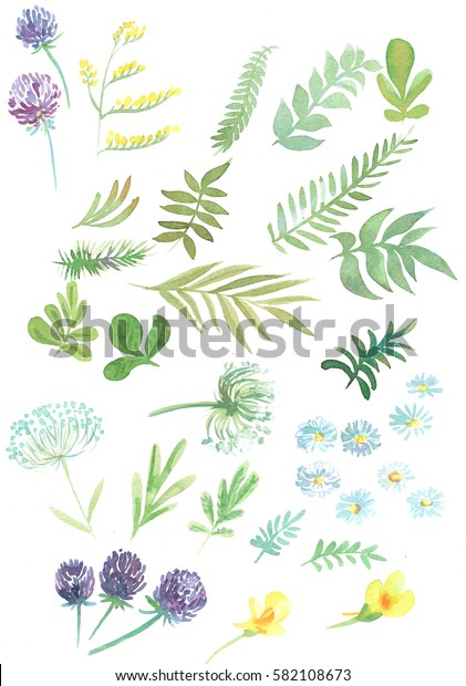 set of leaves branches flowers watercolor