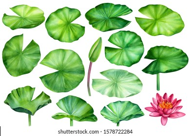 set of leaves, bud and lotus flower on an isolated white background, watercolor clipart