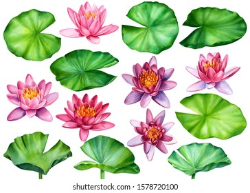 set of leaves and lotus flowers on an isolated white background, watercolor clipart