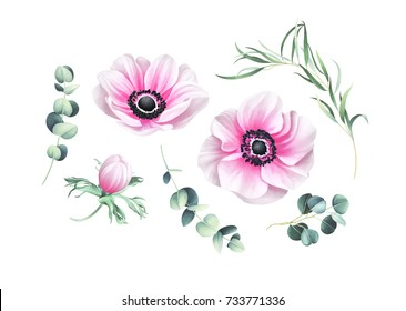 Set of light pink anemones and eucalyptus branches isolated on white background. Hand drawn watercolor illustration.