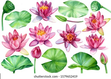 set of lotus flowers, leaves, buds, seeds on an isolated white background, watercolor clipart, hand drawn painting