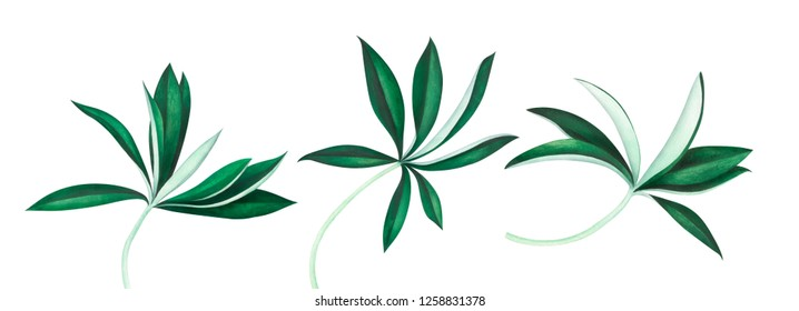 Set of lupine leaves isolated on white background. Watercolor hand drawn illustration.