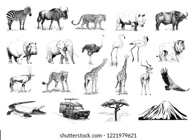 Set of many african animals and car, tree, mountain hand drawn illustrations (originals, no tracing)
