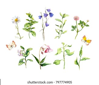 Set of meadow flowers, herbs, grass with butterflies. Botanical watercolor collection