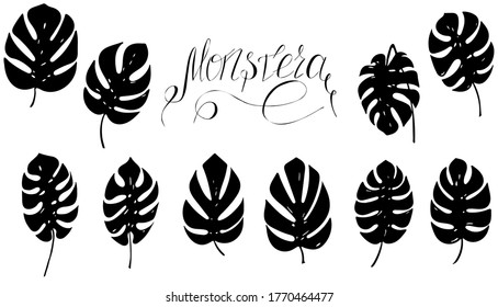 set of monstera leaf silhouettes with inscription lettering, raster copy