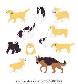 Set of multiple breed walking and sitting dogs, corgi, retriever, shepherd, terrier, spaniel, chihuahua, pomeranian. Isolated on white background. Flat style cartoon stock illustration.