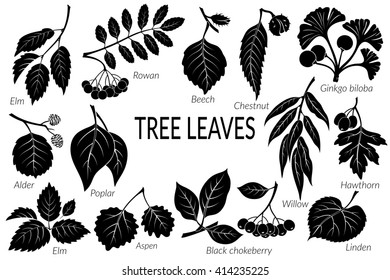 Set of Nature Pictograms, Tree Leaves, Willow, Hawthorn, Poplar, Aspen, Ginkgo Biloba, Elm, Alder, Linden, Rowan, Chestnut, Black Chokeberry and Beech. Black on White Background