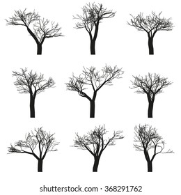 Set of nine deciduous trees with no leaves on a white background. illustration, isolated objects