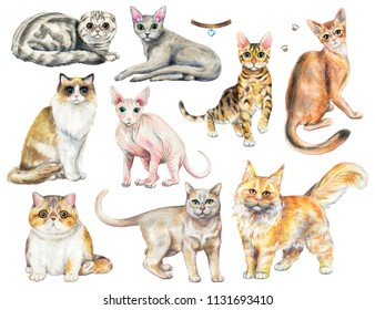 Set with nine different breeds of cats isolated on white background. Watercolor pencils hand drawn illustration