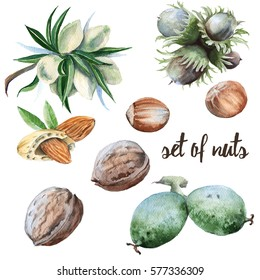 set of nuts. Walnuts, hazelnuts and almonds. Isolated on white background. Watercolor illustration.
