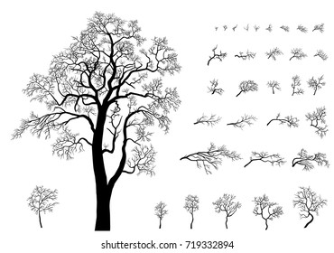 Set o the trees and  branches. Trees formed from these branches. Silhouette of acacia without leaves on White Background. Raster version.