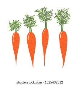 Set of orange carrots. Hand drawn illustration isolated on white background.