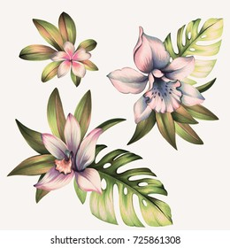 set of orchid flowers. Bouquets with tropical leaves and orchids, isolated on white. watercolor botanical art.