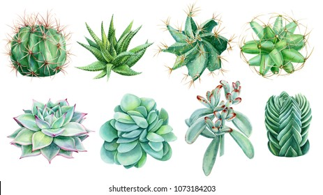set of painted green plants, succulents and cacti, watercolor hand drawing, botanical painting
