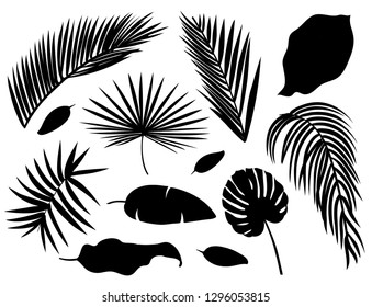 Set of palm leaves silhouettes isolated on white background.
