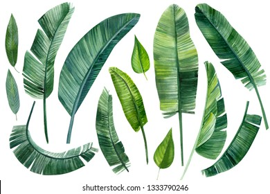 set of palm tree, leaves of tropical forests on an isolated white background, watercolor illustration