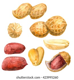 Set of peanuts, whole, shelled, on white background, watercolor illustration