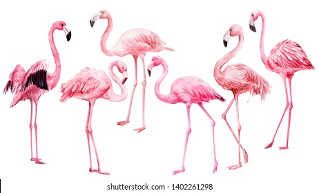 set of pink flamingo on an isolated white background, watercolor illustration, tropical birds