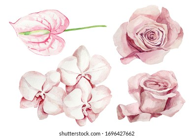 Set of pink flowers. Botanical watercolor illustrations, floral elements, roses, calla lilies and orchid branch. Tropical flowers. Exotic plants.