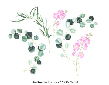 Set of pink forget me not flowers and eucalyptus isolated on white background. Hand drawn watercolor illustration.