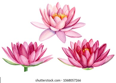 set pink lotus flower, watercolor illustration, hand drawing, flora wedding