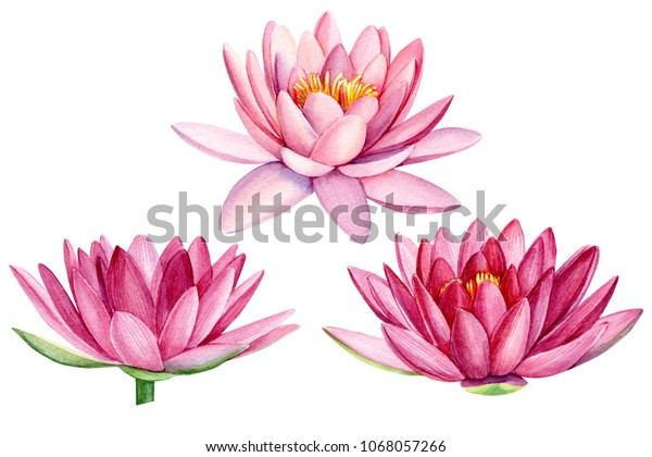 Set Pink Lotus Flower Watercolor Illustration Stock Illustration
