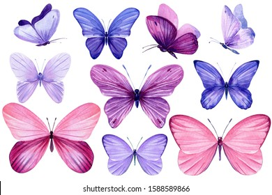 Set of pink and purple butterflies on an isolated white background, watercolor painting