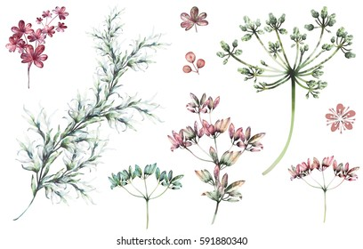 Set plants elements - herbs, leaf, wildflowers. collection garden and wild herb, leaves, branches, illustration isolated on white background, eucalyptus. watercolor style.