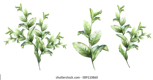 set plants elements.  wild herb,  branches with leaves, illustration isolated on white background, exotic. watercolor style.